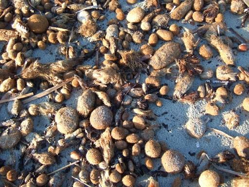 Balade sur le littoral varois Dscf2139