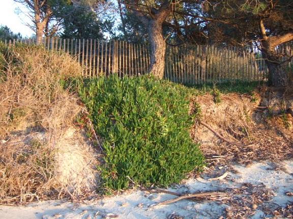 Balade sur le littoral varois Dscf2153