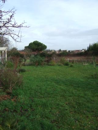 un ptit tour du jardin en janvier - Page 2 Dscf2316