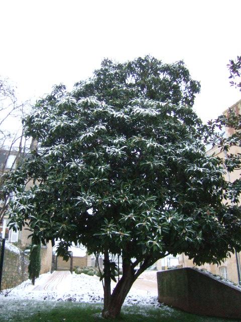 un arbre en hiver - résultats Dscf2454