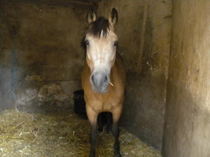 cheval lancant les antérieurs 57994310