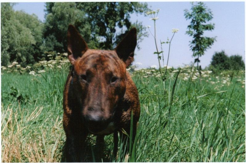 Papotage sur les chiens qui bénéficient de l'Opération Doyen 06-03-10
