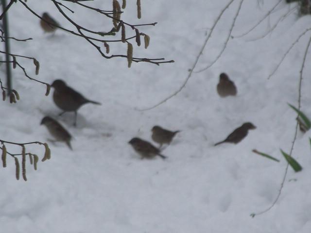 aidez les oiseaux à se nourrir Dscf0812