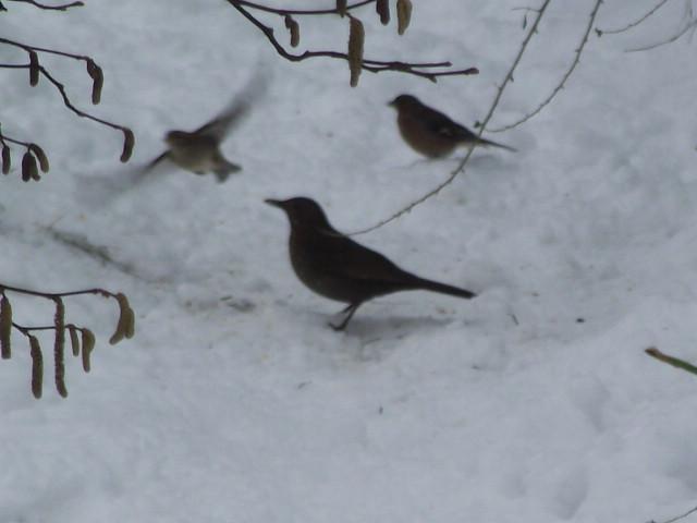 aidez les oiseaux à se nourrir Dscf0813