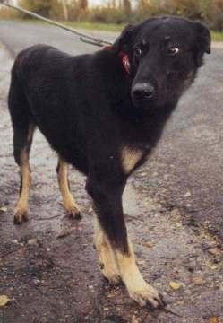 Papotage sur les chiens qui bénéficient de l'Opération Doyen Herman10