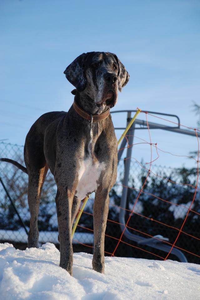 """Evolution """"physique"""" de vos chiens Dsc_5110"""