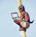 """10 công việc """"căng óc"""" nhất trong năm 2012 Thumb_10"""