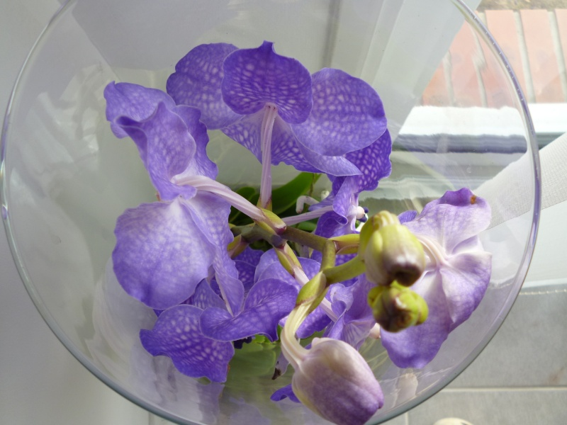 Ma nouvelle orchidée  : Bonheur du jour..... P1020210