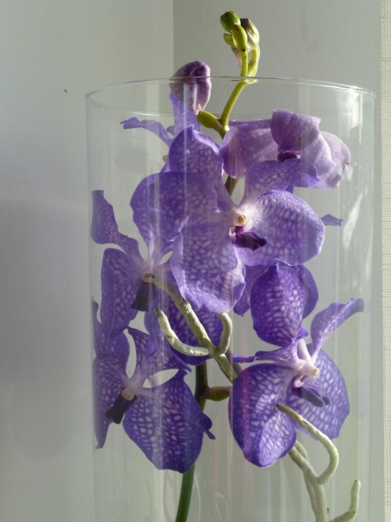 Ma nouvelle orchidée  : Bonheur du jour..... P1020211