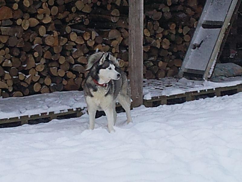 mes n'amours dans la neige  Photo013
