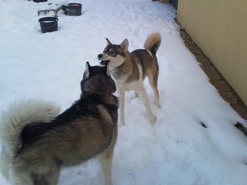 mes n'amours dans la neige  Photo016