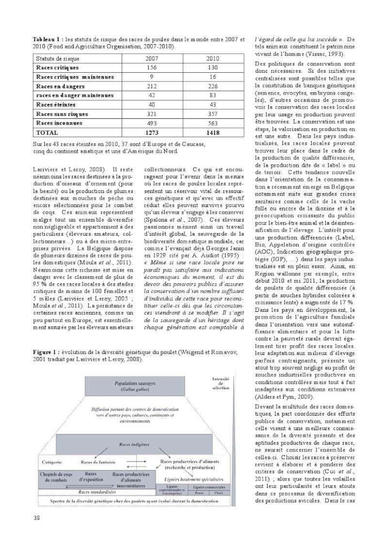 poules de races belges, document pdf Poules11