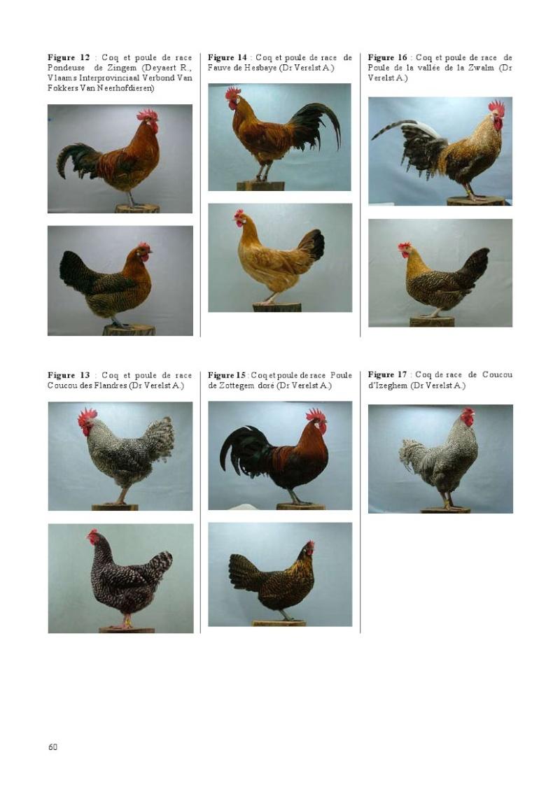 poules de races belges, document pdf Poules34