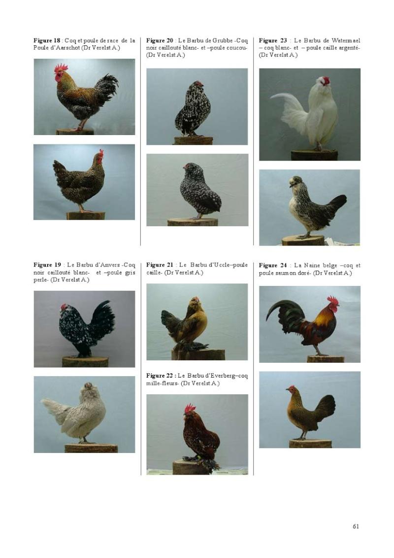 poules de races belges, document pdf Poules35
