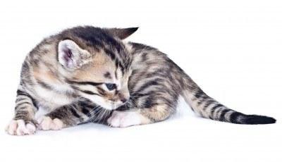 Katzengefärten Windst10