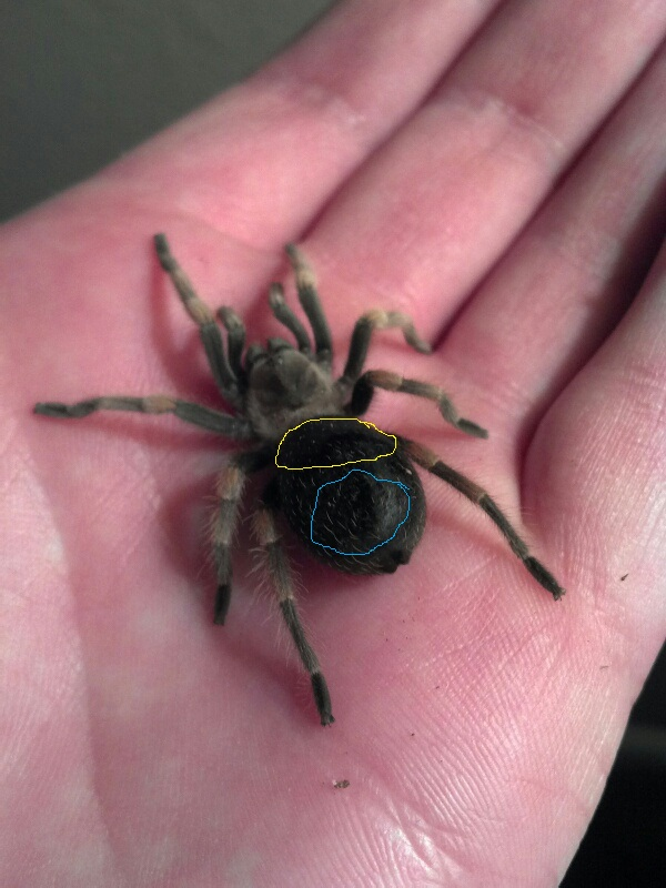 Just got a baby red knee tarantula and need some help! Baby_r10