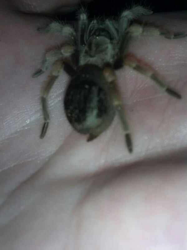 Just got a baby red knee tarantula and need some help! Fxcam_10