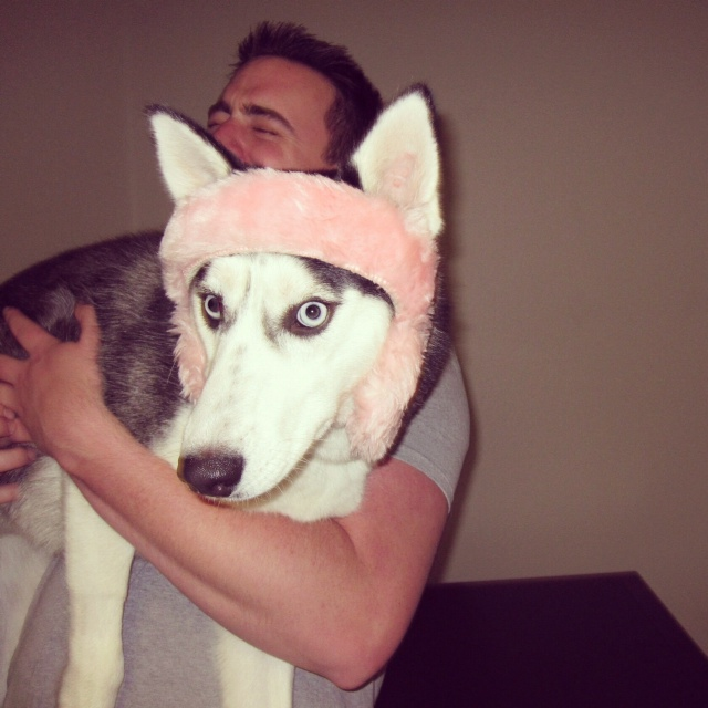 Silly husky game Photo_10