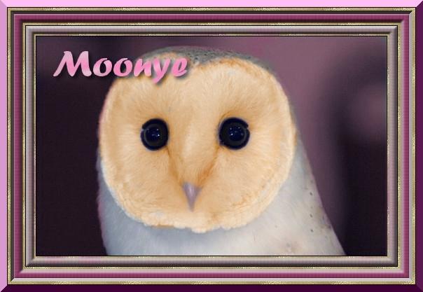 Cadeaux! Moonye10