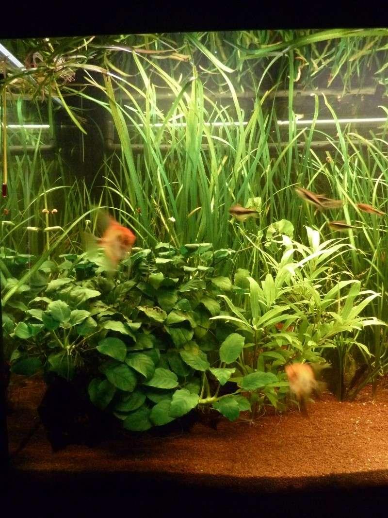 Enormes (ou pas) problème sur mon aquarium !! P1000210
