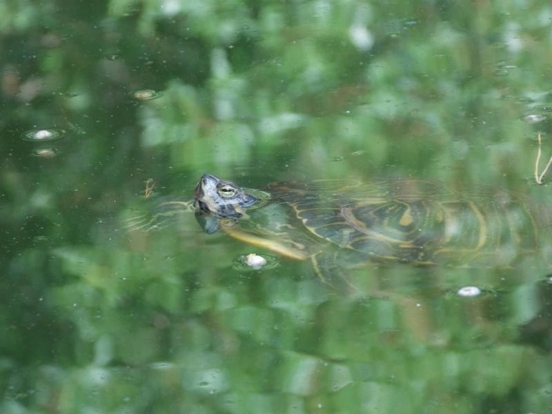 Mes photos de Reptiles  02112