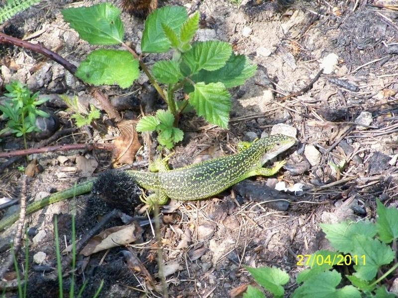 reptiles français 06310