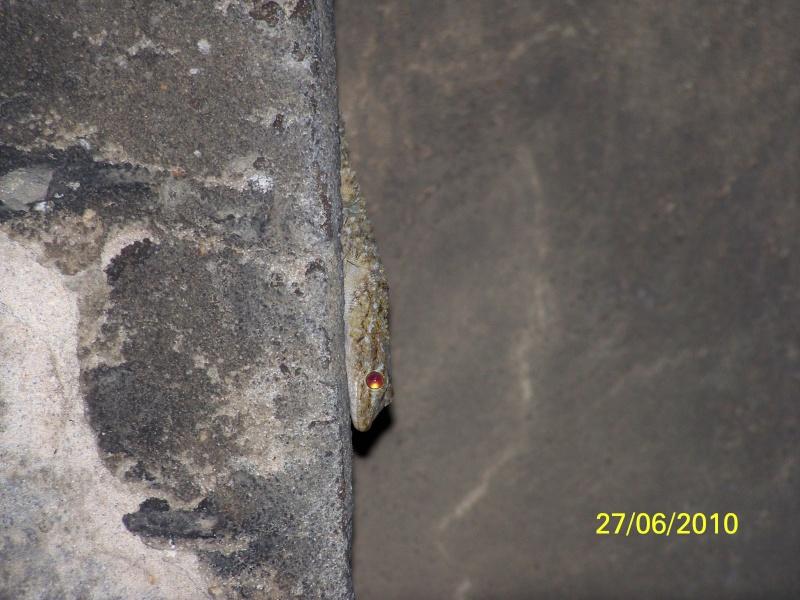 reptiles français 10510