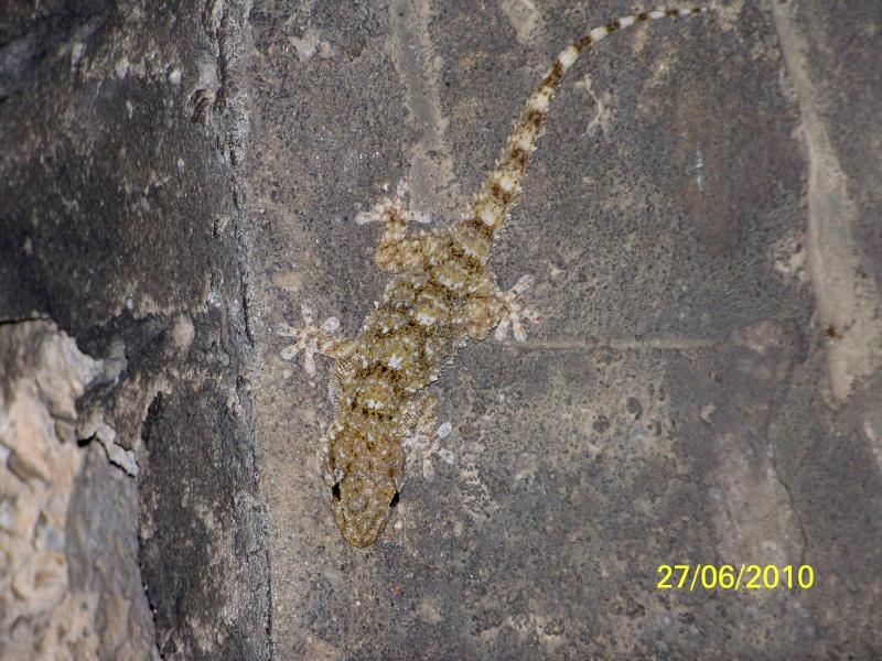 reptiles français 11810
