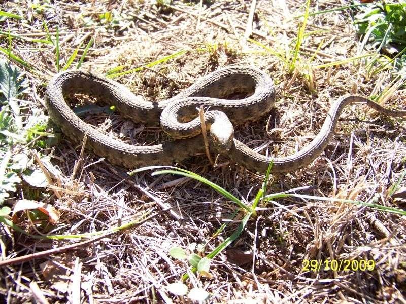 reptiles français 17310