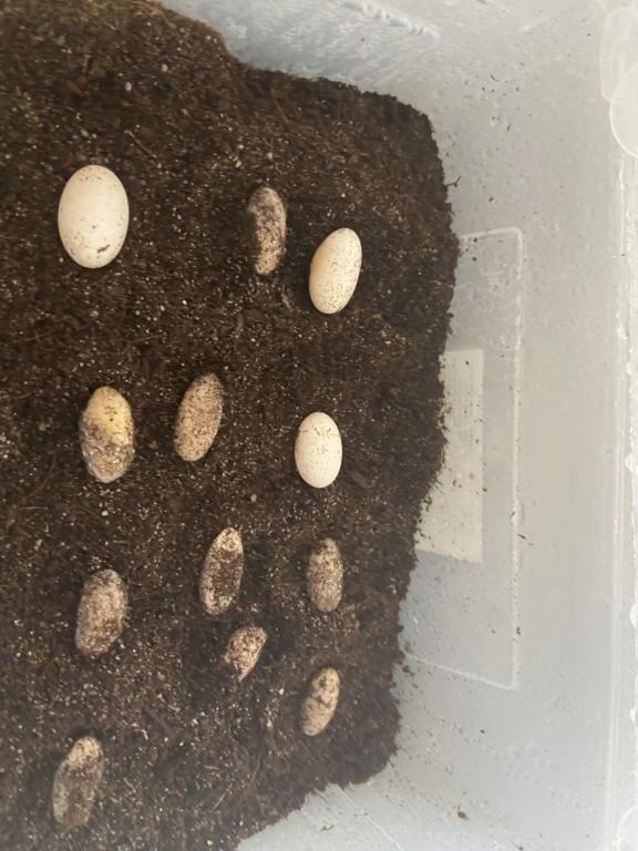 Avis sur œufs  3a69b910