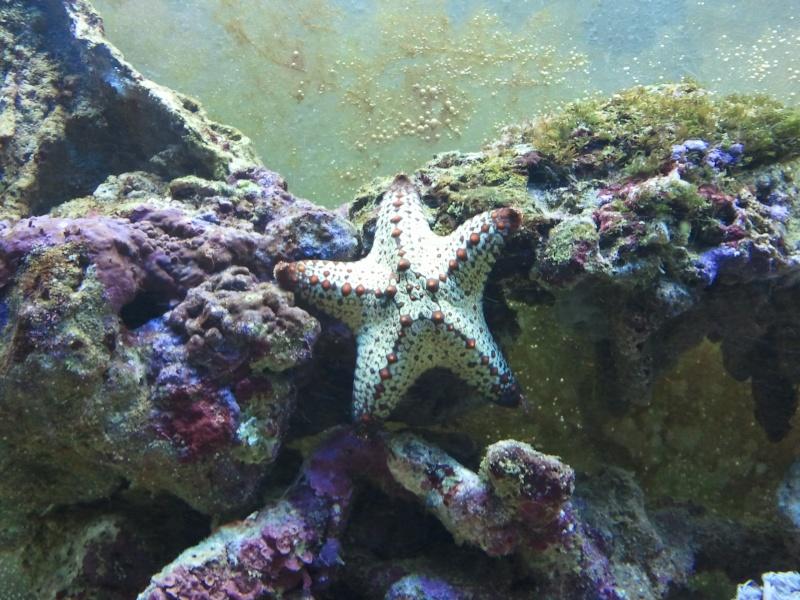 Quelle est cette étoile svp? 20121213
