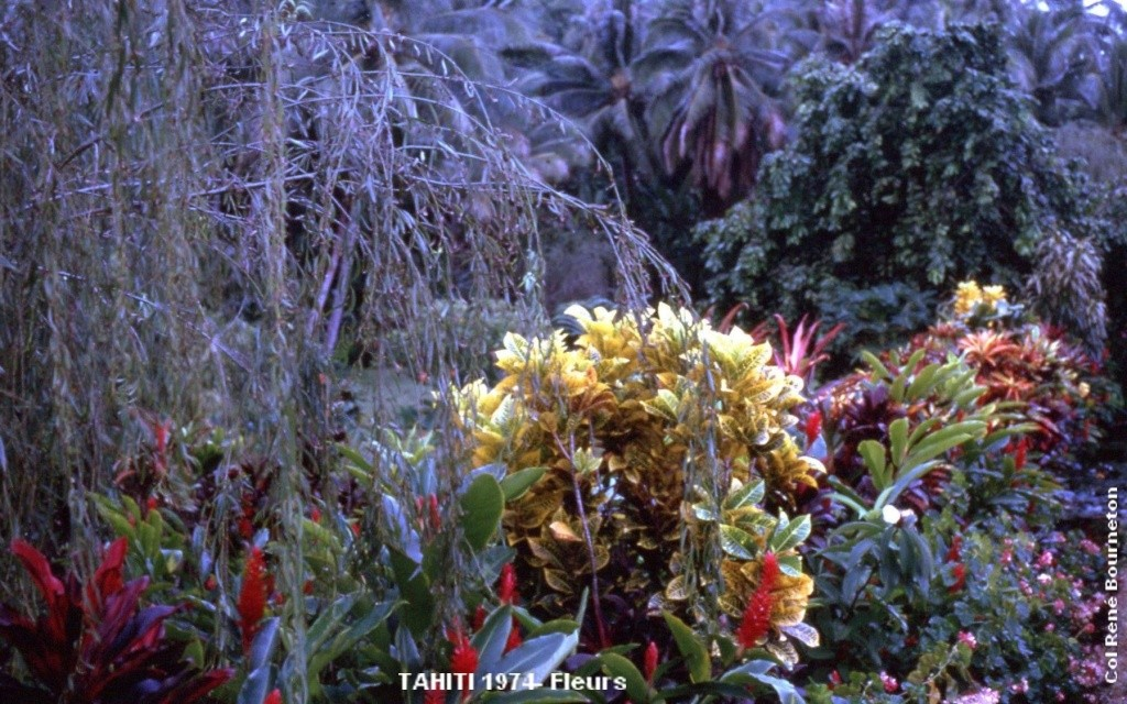 [Tahiti] Il n'y avait pas que le front de mer a Tahiti - Page 4 Tahiti20