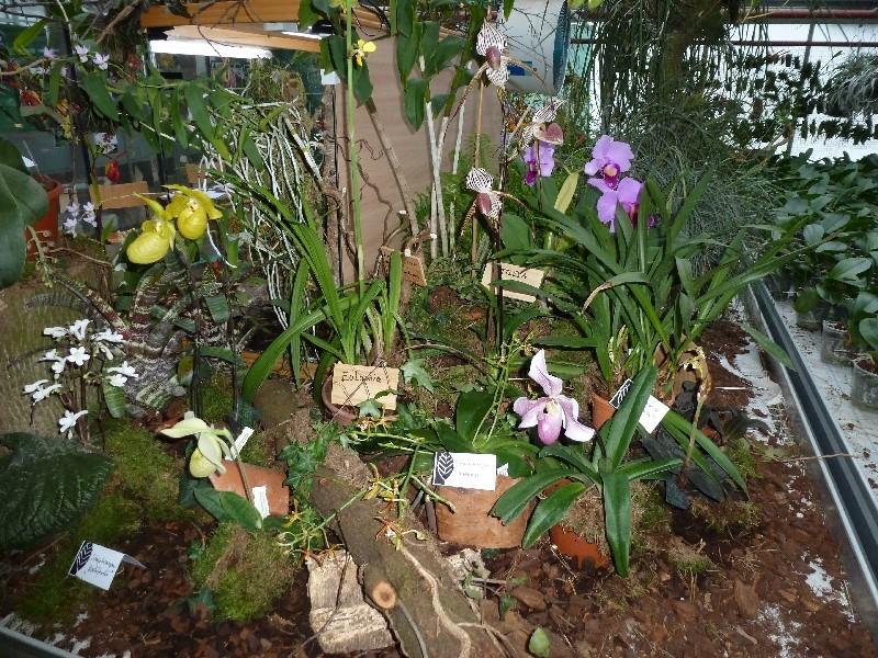 Letzte große Orchideenausstellung am Zinterhof ... P1070412