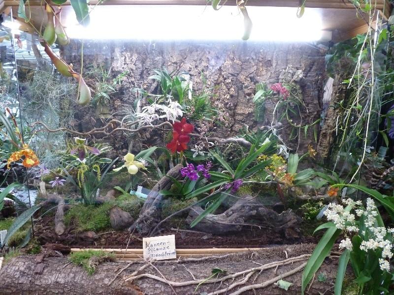 Letzte große Orchideenausstellung am Zinterhof ... P1070413