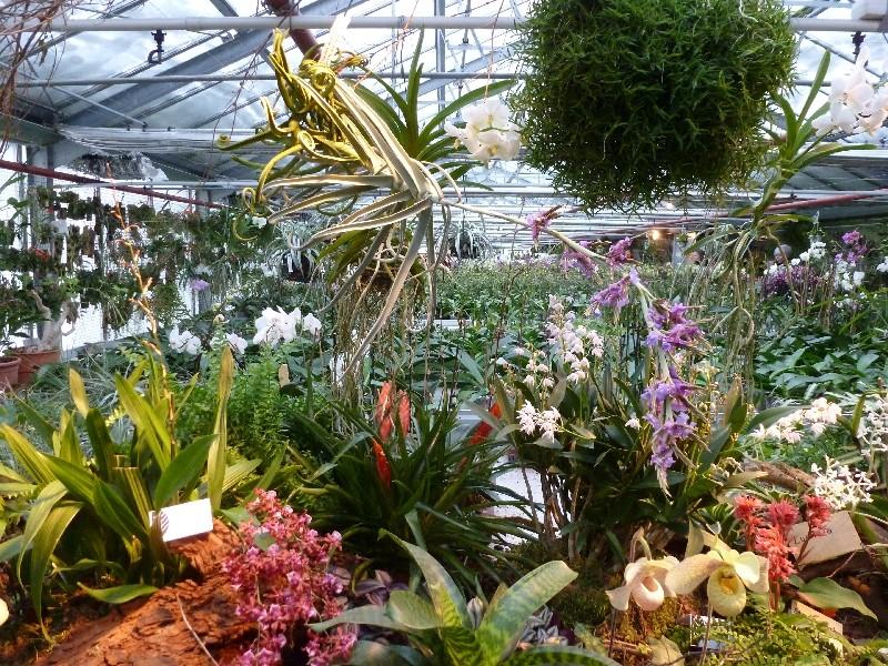 Letzte große Orchideenausstellung am Zinterhof ... P1070511
