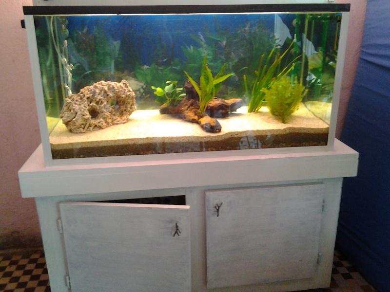 mon premier aquarium Photo011