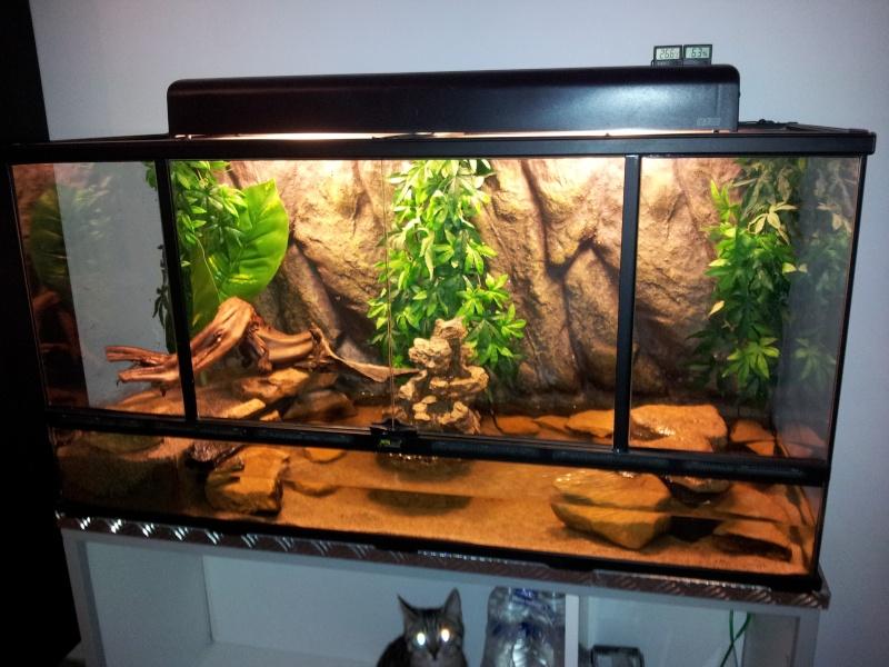 [résolu]Un terrarium à la place d'un aquarium pour des Periophthalmus 20130112