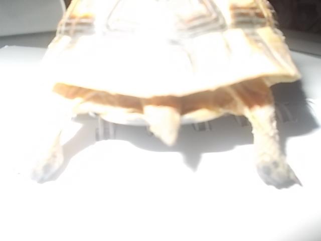 qui peu m'aider a identifier cette tortue Dscn0738