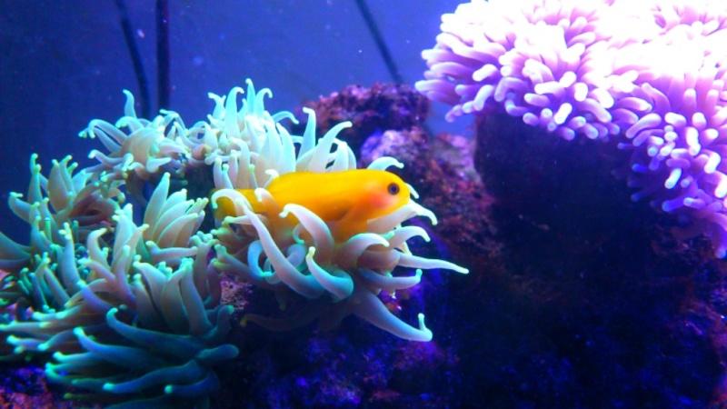 Population nano aquarium eau de mer Picsar50