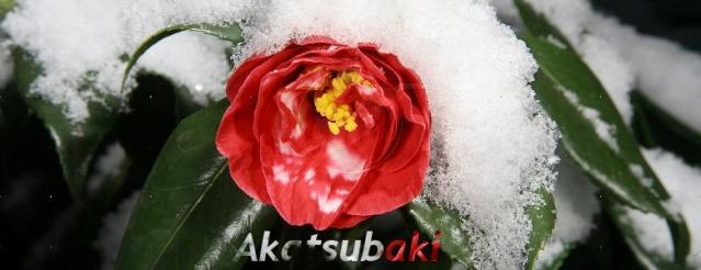 Akatsubaki Guild Page