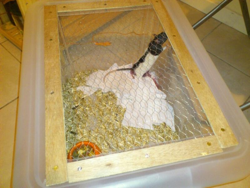 Bricolage cage maternité  13593210