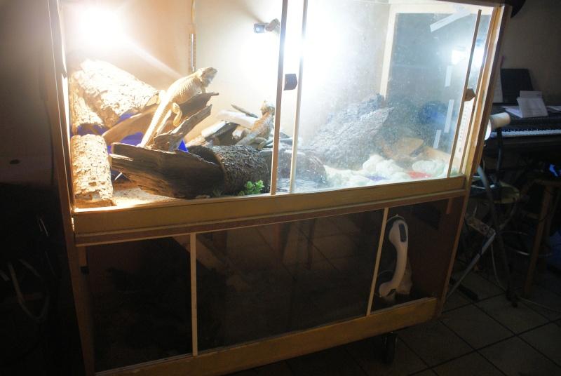 mon terrarium en photo 111