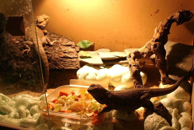 mon terrarium en photo Dsc00010