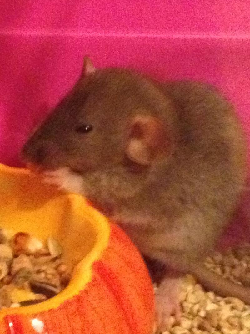 couleur de mes petits ratous? Photo_18