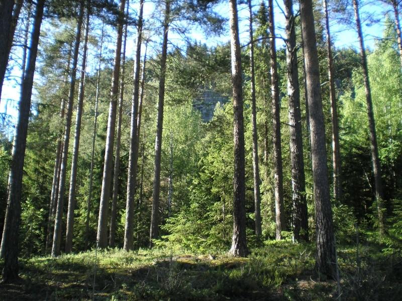 8th Bn Sherwood Foresters - Last stand at Tretten  Vardek12