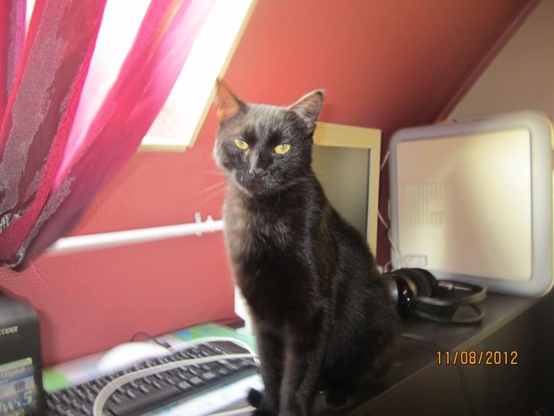 Shadow - noir yeux ors né en 2011 Img_0512