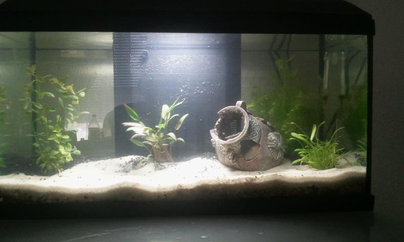 Mon premier aquarium 2013-017