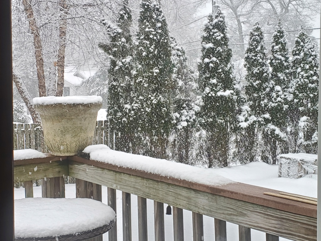 Monday's N&W Snowfall - Page 6 20210219