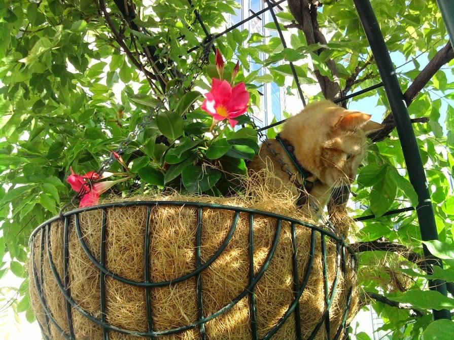 Et si vous nous montrez votre jardin ? Ou balcon ... vos fleurs ? - Page 14 21191912