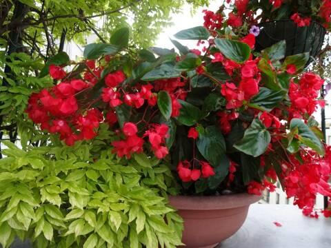 Et si vous nous montrez votre jardin ? Ou balcon ... vos fleurs ? - Page 14 Dsc00111